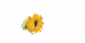 Immersive Van Gogh Phoenix